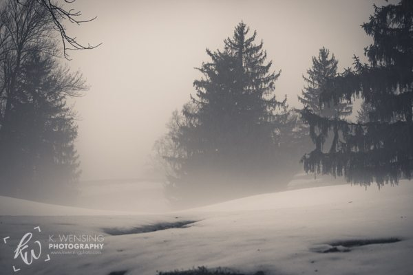 Trees in Norristown, Pennsylvania during fog.