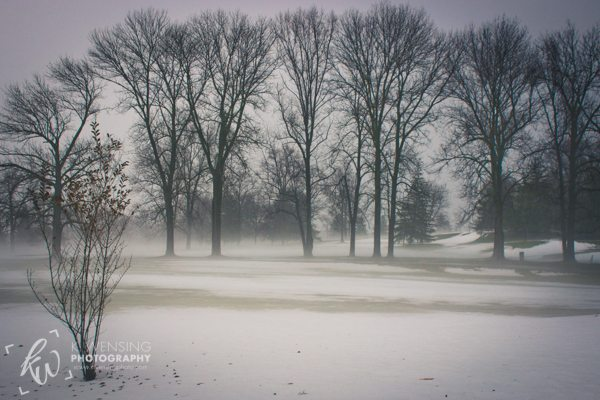 Wintry fog among the trees.