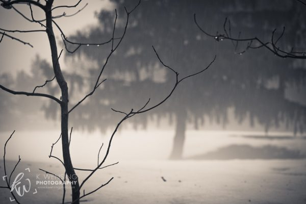 A couple drops of rain hang onto thin branches against a misty landscape.