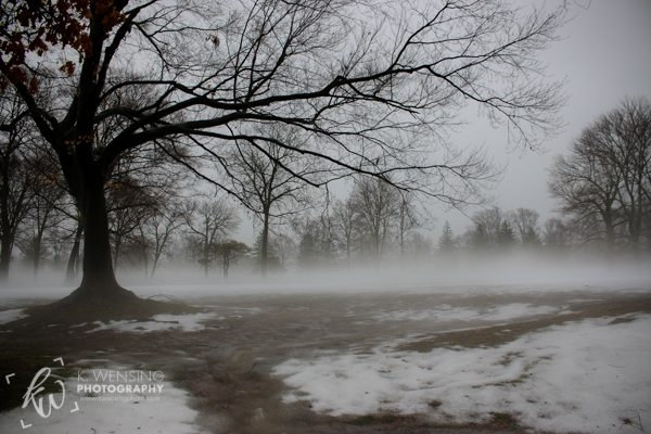 Trees coated in the fog.