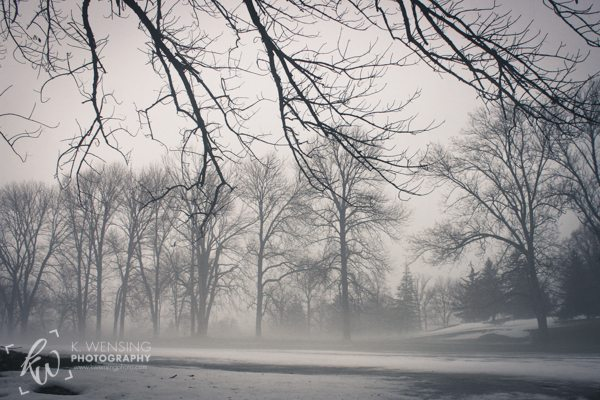 Bare branches against the white sky and fog.