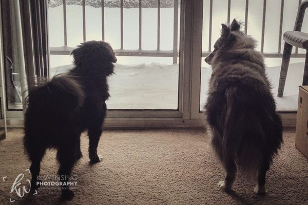 Zoey silently questioning Chewie about whether or not going out in the snow would be a good idea.