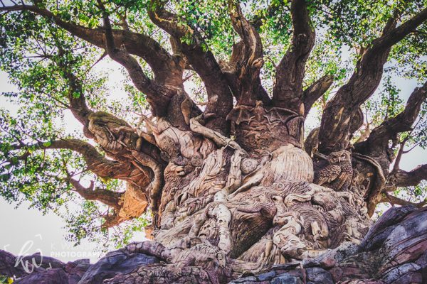The great tree of life in Disney's Animal Kingdom.