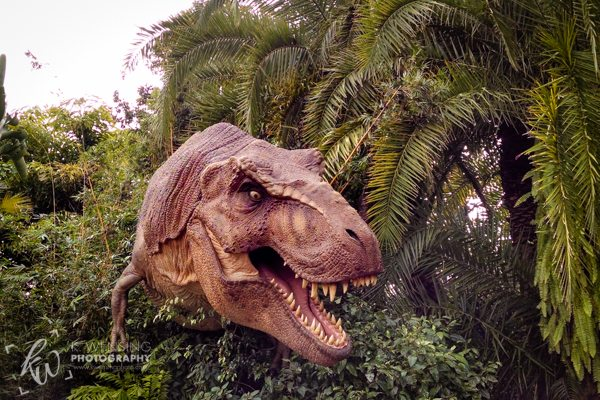 The t-rex is loose in Universal Islands of Adventure!