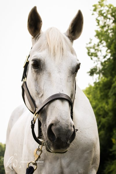 Close up of Logan the white horse.