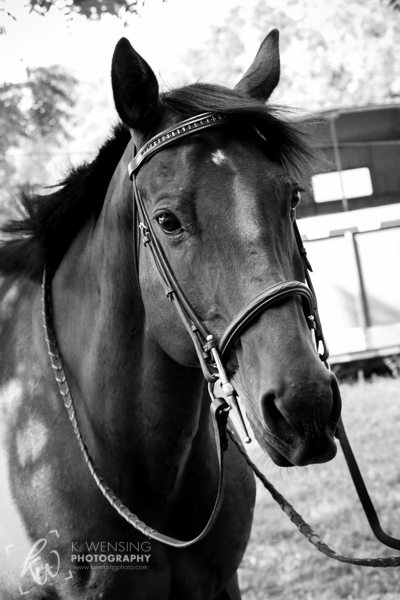 Black and white portrait of horse.
